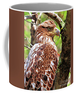Immature Eagle Coffee Mug