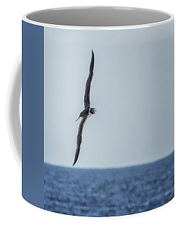 Coffee Mug featuring the photograph Immature Masked Booby, No. 5 Sq by Belinda Greb