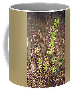 Coffee Mug featuring the photograph In Tall Grass by Whitney Goodey