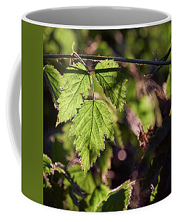 Coffee Mug featuring the photograph In Triplicate by Whitney Goodey