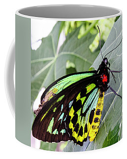 Insect Kaleidescope Coffee Mug