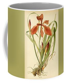 Iris Cuprea Copper Iris.  Coffee Mug