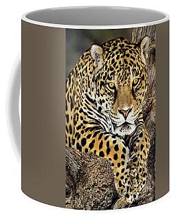 Jaguar Portrait Wildlife Rescue Coffee Mug