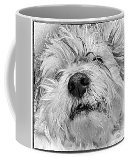 Coton De Tulear Dog Coffee Mug