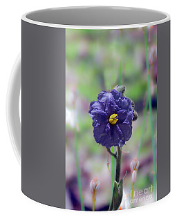 Kangaroo Apple, Solanum Aviculare Coffee Mug