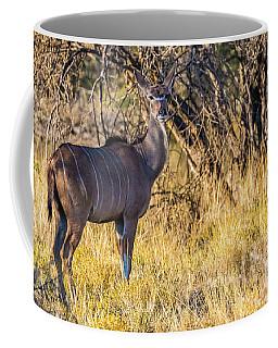 Kudu, Namibia Coffee Mug