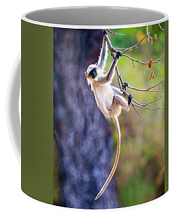 Monkey Hanging Coffee Mugs Fine Art America