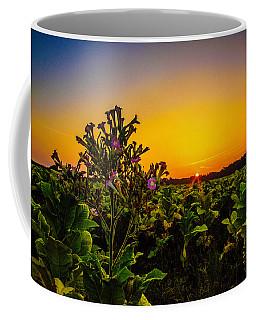 Last Of The Tobacco Blooms Coffee Mug