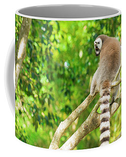 Lemur By Itself In A Tree During The Day. Coffee Mug