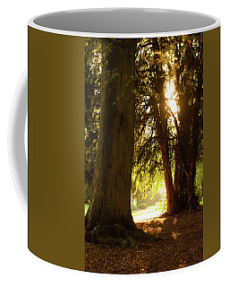 Coffee Mug featuring the photograph Light Between Trees by Scott Lyons