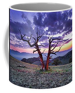 Limber Pine Sunset Coffee Mug