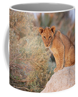 Coffee Mug featuring the photograph Lion Cub On Termite Hill by John Rodrigues