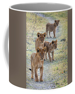 Coffee Mug featuring the photograph Lion Cubs On The Trail by John Rodrigues
