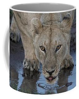 Lioness Drinking Coffee Mug