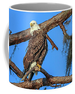 Coffee Mug featuring the photograph Lookout Eagle by Tom Claud