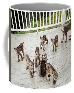 Coffee Mug featuring the photograph Lynx Family Portrait 11x14 by Tim Newton