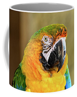 Macaw Parrot Portrait Coffee Mug