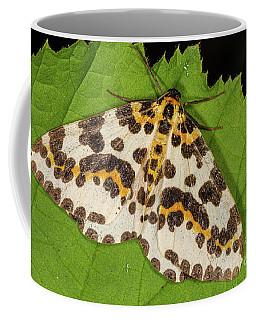 Magpie Moth Coffee Mug