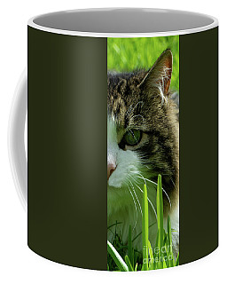 Coffee Mug featuring the photograph Maine Coon Cat Photo A111018 by Mas Art Studio