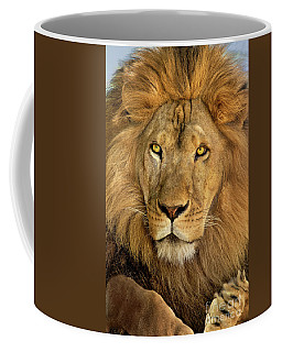 Male African Lion Portrait Wildlife Rescue Coffee Mug