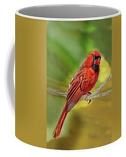 Male Cardinal Headshot  Coffee Mug