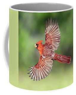 Male Cardinal In Flight Coffee Mug
