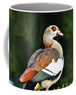 Male Egyptian Goose Coffee Mug