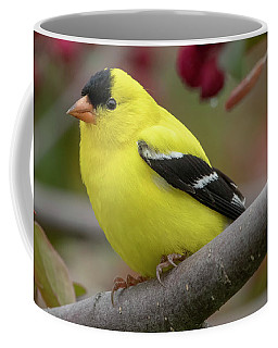 Male Goldfinch Checking Me Out Coffee Mug