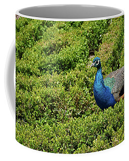 Male Peafowl In Retiro Park, Madrid, Spain Coffee Mug