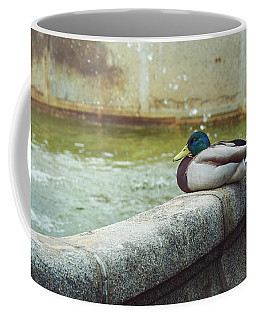 Mallard Resting On The Fountain Of The Fallen Angel In The Retiro Park - Madrid, Spain Coffee Mug