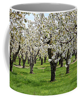 Many Cherry Blossoms In Spring Orchard Coffee Mug