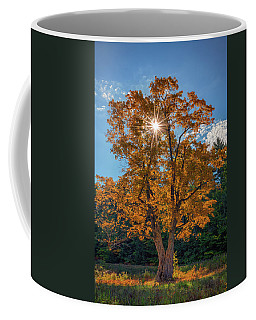Coffee Mug featuring the photograph Maple Tree In Full Autumn Glory by Rick Berk