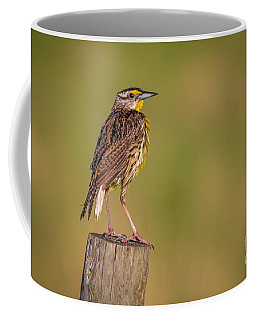Coffee Mug featuring the photograph Meadowlark On Post by Tom Claud