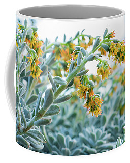 Mexican Echeveria In The  Morning Coffee Mug