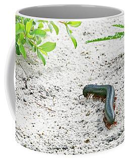 Coffee Mug featuring the photograph Millipede-namibia by PJ Boylan