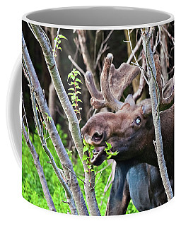 Moose With An Anomalous Eye, At Dinner Time Coffee Mug