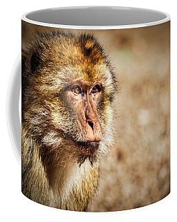 Morocco Macaque #2 Coffee Mug