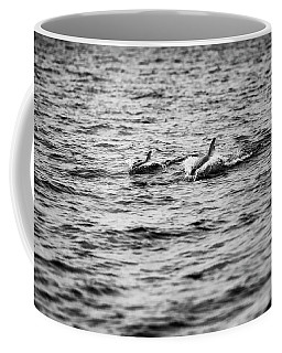 Mother Dolphin And Calf Swimming In Moreton Bay. Black And White Coffee Mug