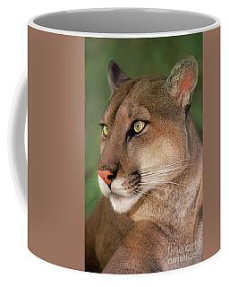 Mountain Lion Portrait Wildlife Rescue Coffee Mug