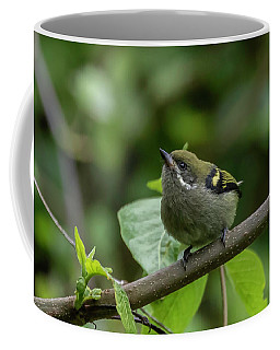 Moustached Tinkerbird Coffee Mug