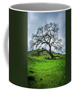 Mt Diablo Oak Tree Coffee Mug