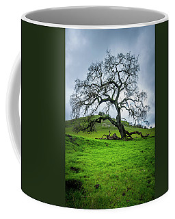 Coffee Mug featuring the photograph Mt Diablo Oak Tree by Scott McGuire