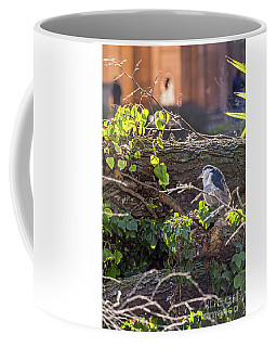 Coffee Mug featuring the photograph Night Heron At The Palace Revisited by Kate Brown
