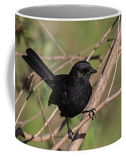 Northern Black Flycatcher Coffee Mug