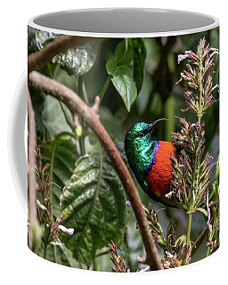 Northern Double-collared Sunbird Coffee Mug