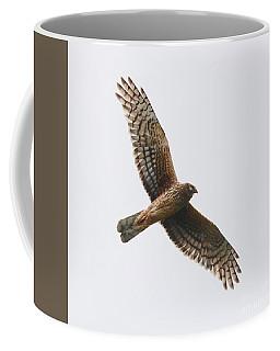 Northern Harrier In Flight Coffee Mug