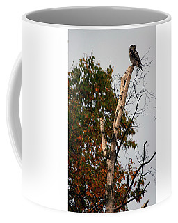 Northern Hawk Owl 101402 Coffee Mug