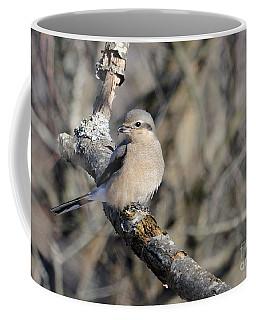 Northern Shrike Coffee Mug