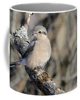 Northern Shrike Coffee Mug