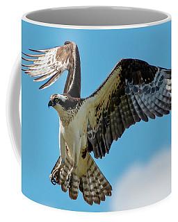 Osprey Hover Coffee Mug